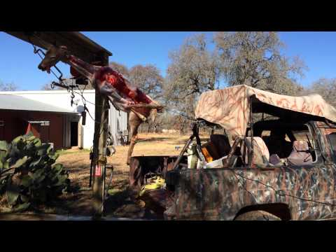 How to skin a deer with a truck