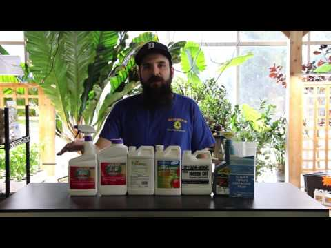 How to Kill Thrips in your Grow Room