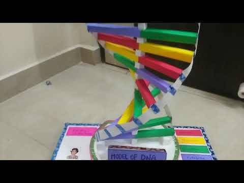 Model of DNA School Projects