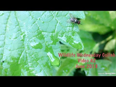 Wildlife Wednesday Collaboration - Episode 2 - Wildlife in our area!