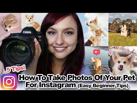 How To Take Photos Of Your Pet For Instagram | Easy Beginner Tips