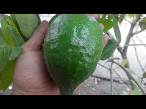 How to change your home energy with green lemon (lime fresh)!