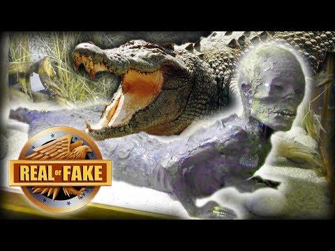 ALLIGATOR MAN - real or fake?