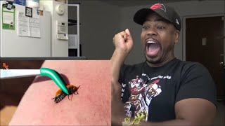 Download STUNG by a COW KILLER REACTION!!! Video