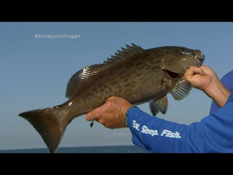 Shallow Water Grouper Fishing out of Homosassa Florida