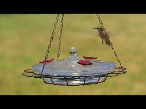 Perky-Pet® Oasis Hummingbird Feeder Instructional Video | Glass Hummingbird Feeder