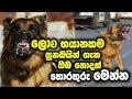 Download ලොව භයානකම සුනඛයින් ගැන ඔබ නොදත් තොරතුරු මෙන්න   World Most Dangerous Dog Breeds MP3,3GP,MP4