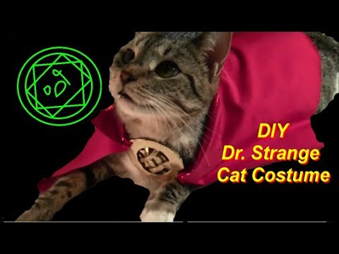 Dr. Strange Cat Costume DIY