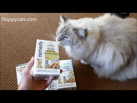 Pet Remedy - Stress Relief For Cats‎ - Anxiety in Cats Remedies - ラグドール - = ネコ - Floppycats