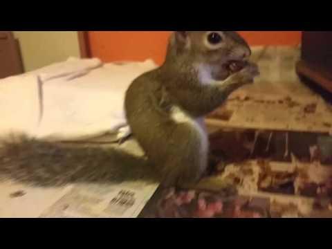 11/27/2014  SQUIRRELS LOVE PECANS!