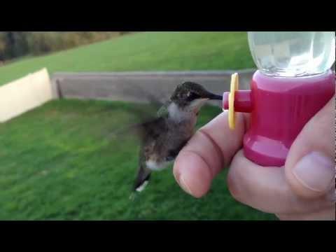 The most AMAZING hummingbird video!