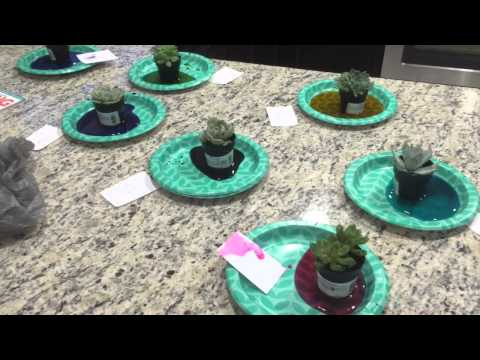Dying Succulents Different Colors: Test 1