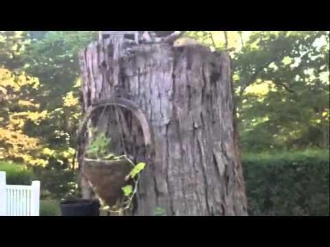 Termites Stump