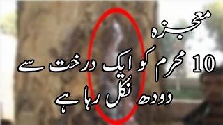 Mojaza - 10 Muharram Mojza Milk Coming Form Tree