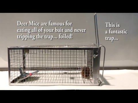 Rat Trap or Mouse Trap by Atomic Barbie Medium-Trap Live Catch REVIEW