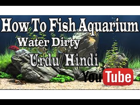 How To Fish Aquarium Water Dirty Reason Urdu/Hindi