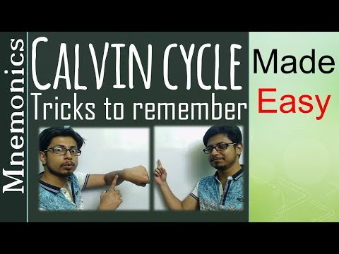 Calvin cycle tricks to remember | Calvin cycle made easy in 5 minutes