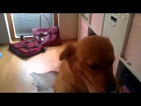 Dog smells foot