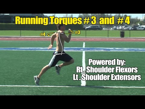 Upper Body Athletic Torques #3 and #4 - Shoulder Flexors/Extensors for Running Speed