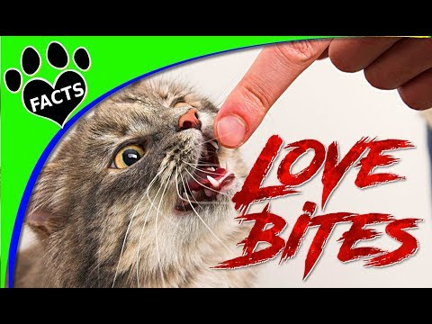 Why Does My Cat Bite Me? - Animal Facts - Happy Valentines!