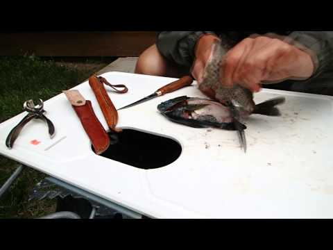 How to Clean and Cook Sunfish