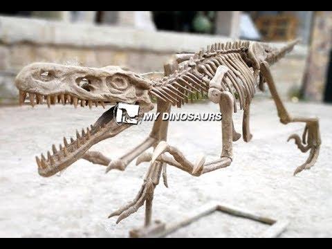 Fiberglass Museum Dinosaur Skeleton Models