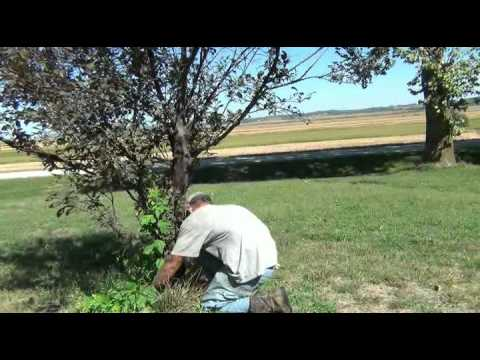 How to Prune a Flowering Tree