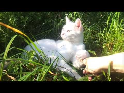 Stray cat being petted, enjoys it for the very first time