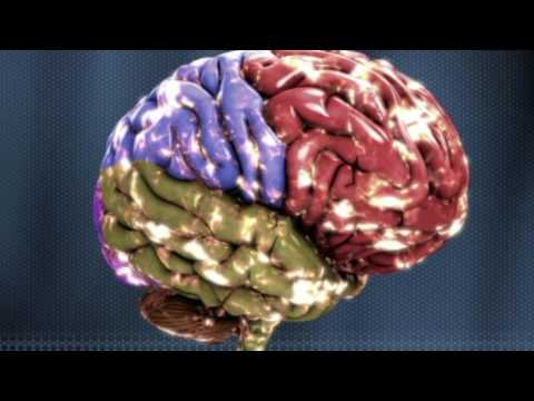 What Is White Matter and Why Does It Matter? - Science Ambassador Scholarship
