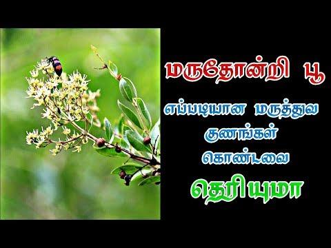 மருதோன்றி பூவின் மருத்துவ குணங்கள் தெரியுமா | Medicinal use of flower of lawsonia alba