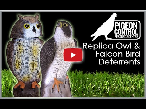 Replica Fake Plastic Owl Decoys - Instructional User Guide