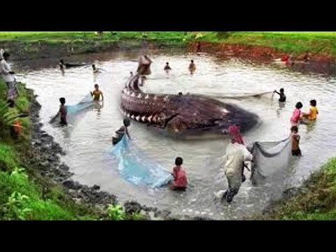 10 Biggest Fish Catches In The World