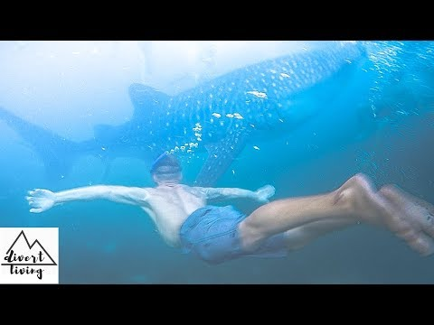 EXPLORING OSLOB, CEBU | WHALE SHARKS OF OSLOB, TUMALOG WATERFALL, PHILIPPINES TRAVEL VLOG 2018 |