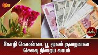 கோழி கொண்டை பூ மூலம் குறைவான செலவு நிறைய லாபம்   Agriculture   5 Mins   Tamil News   Sun News