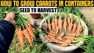 How To Grow Carrots At Home | SEED TO HARVEST