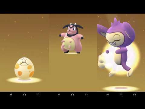 Hatching Over 200 gen 2 pokemon go eggs - Pokemon Go eggs - Gen 2 eggs - generation 2 eggs