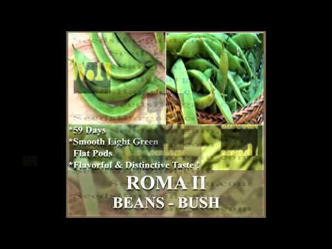 ROMA II Bean seeds - BUSH TYPE,  SEEDS on  www.MySeeds.Co