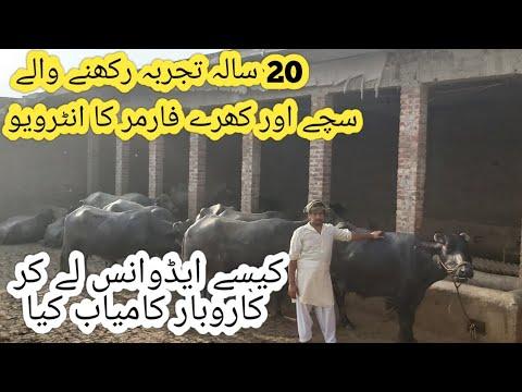 Watch nili Ravi buffalo for sale 14_5_2019 in Punjab