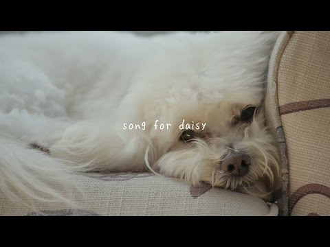 gnash - song for daisy (audio)