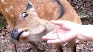 I PROMISE that YOU will get A LAUHG ATTACK - FUNNY ANIMAL compilation