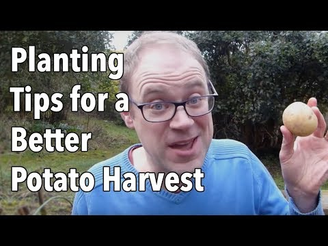 Growing Potatoes: Planting Tips for a Better Potato Harvest