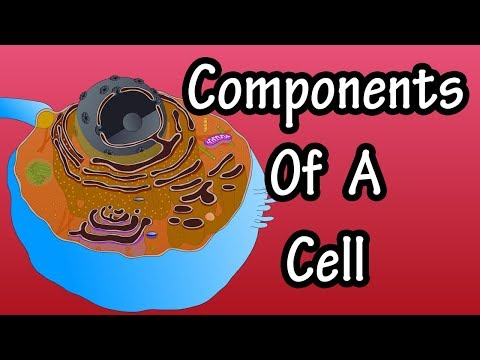 Components Of A Cell And Their Functions - Structure Of A Cell - Functions Of A Cell