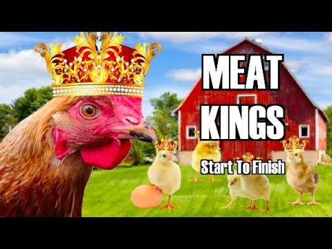 Raising Meat Chickens (Start To Finish )