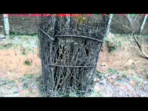 Natural Tree Guard