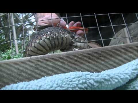 Snake in a Wire Fence