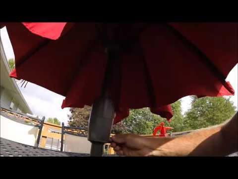 Bat still in umbrella