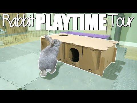 Bunny Playtime Tour