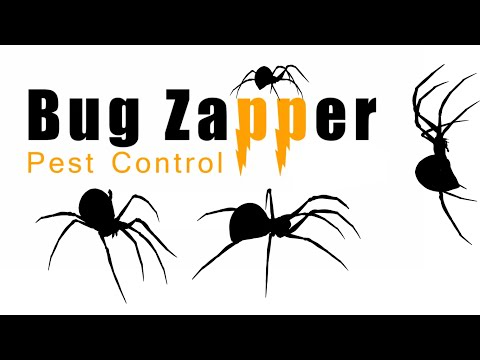 Black Widow Spider Exterminator | Have You Seen A Spider Like This?