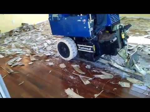Removal Of Glue Down Wood Flooring In Pheonix Scottsdale Arizona - How To Remove Glued Down Wood Flooring - Wood Boring Insects