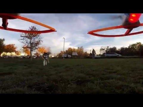 Bradshaw Dog Park DJI Phantom ll  Siberian Husky Play
